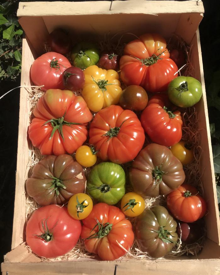Plateau Mix de tomate couleurs, 3.5 kg environ.